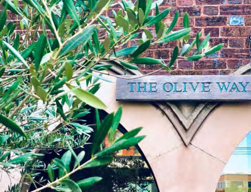 Olive Way – Future Directions